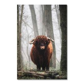 Canvas Schotse Hooglander Bos