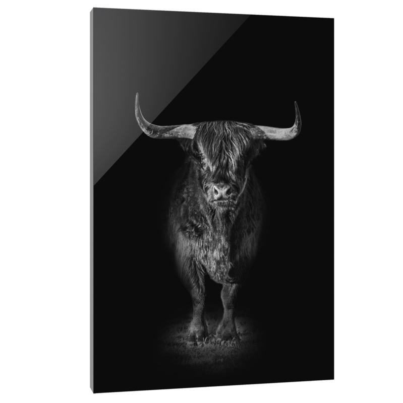 Plexiglas Schotse Hooglander Black