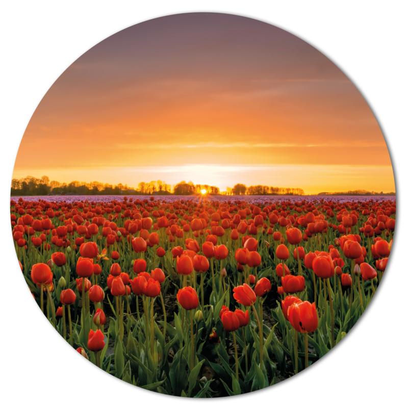 Muurcirkel Tulpenveld