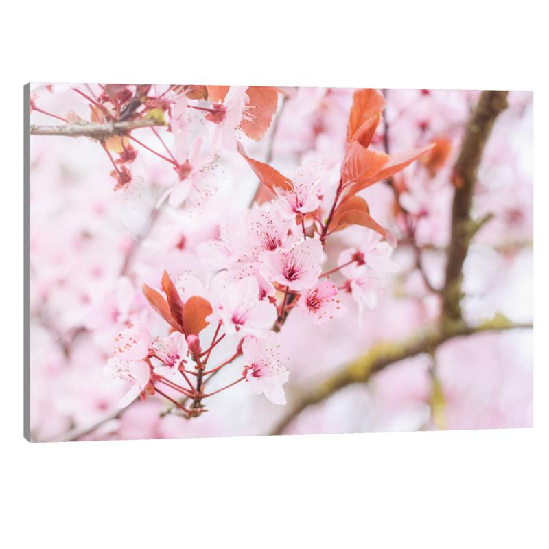 Plexiglas Bloesem Roze