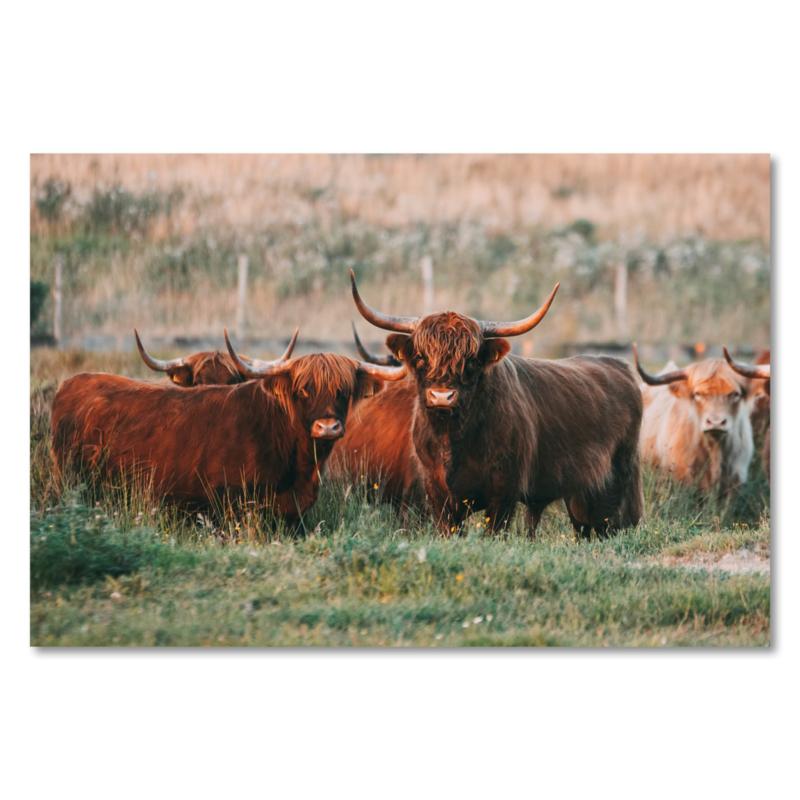 Canvas Schotse Hooglanders