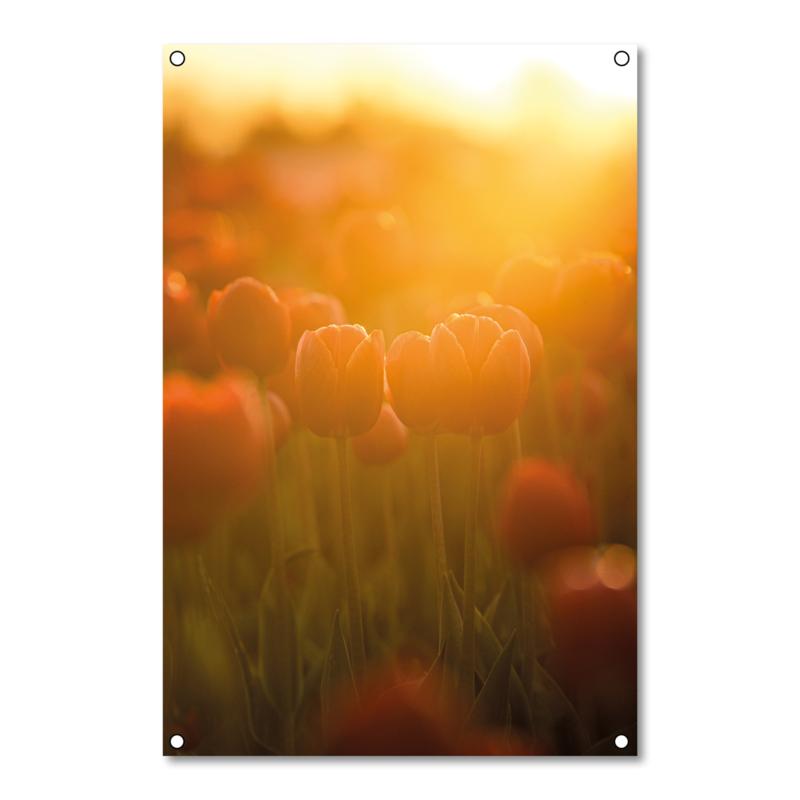 Tuinposter Tulpen