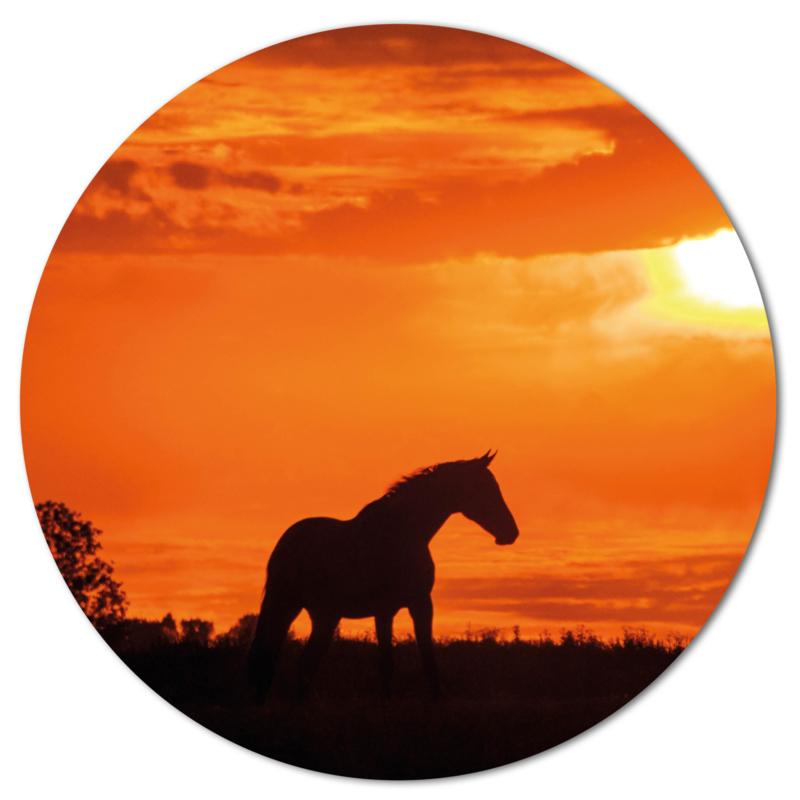 Muurcirkel Paard
