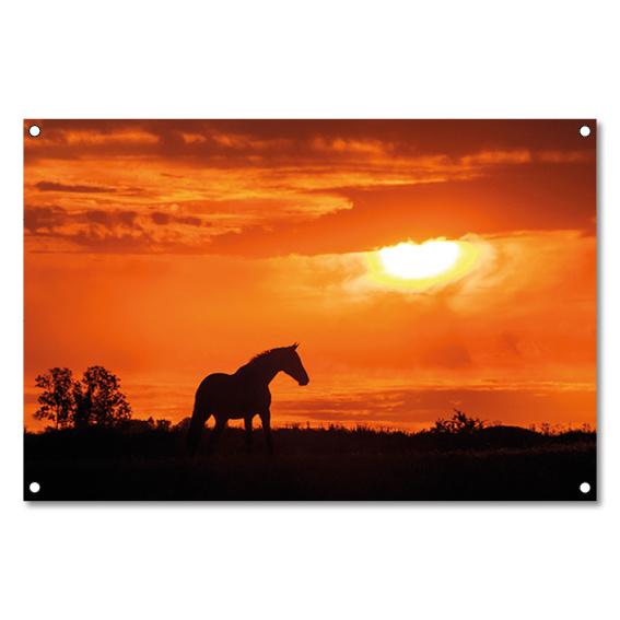 Tuinposter Paard Zonsondergang