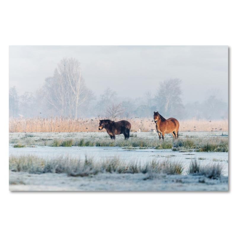 Canvas Exmoor Pony's Winter
