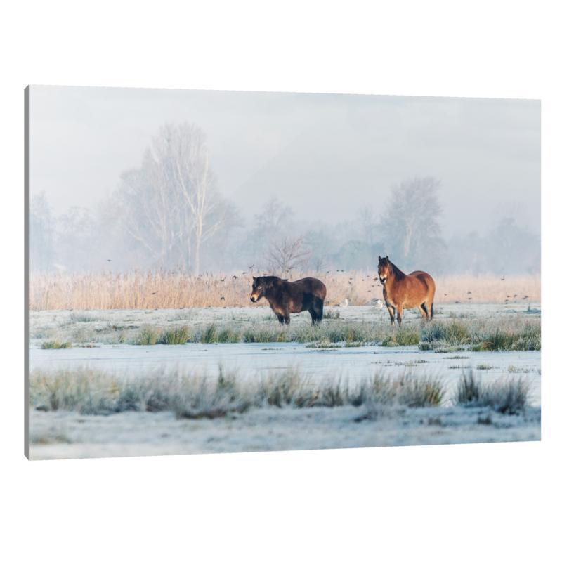 Plexiglas Exmoor Pony's Winter