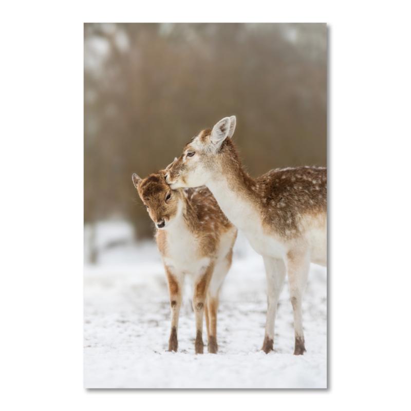 Canvas Hertjes in de winter