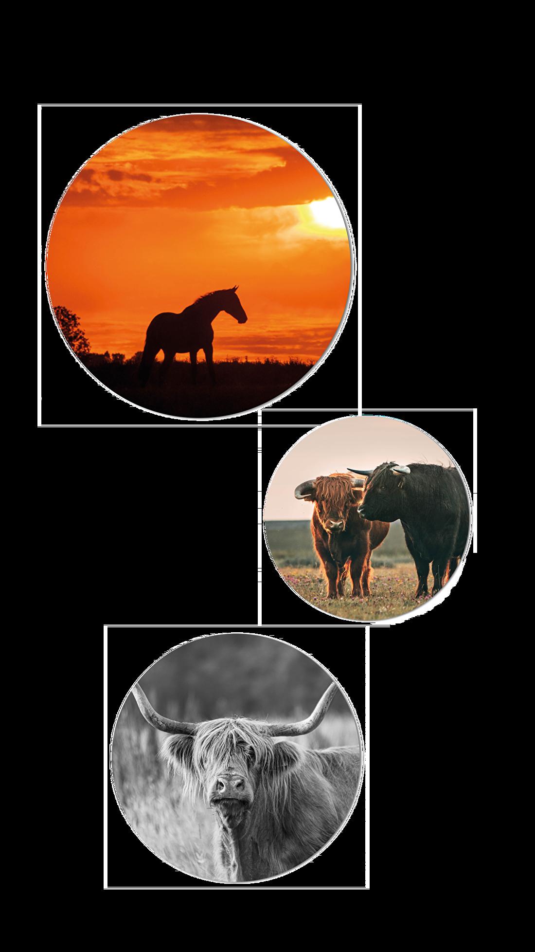 muurcirkels wandcirkels ronde foto