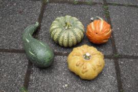 Setje terracotta groenten