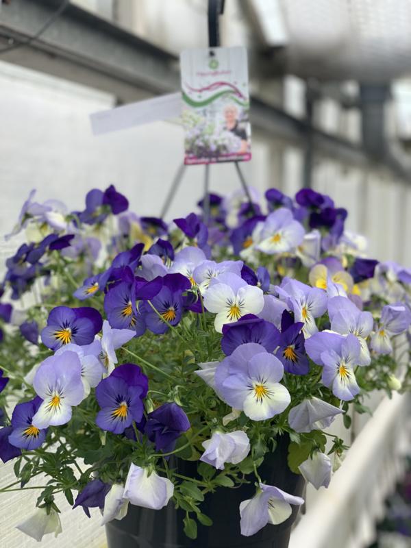 Voorjaarsbloeiers Mix Blue