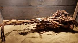 Azalea root AR0010