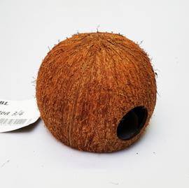 JBL cocos cava 3/4