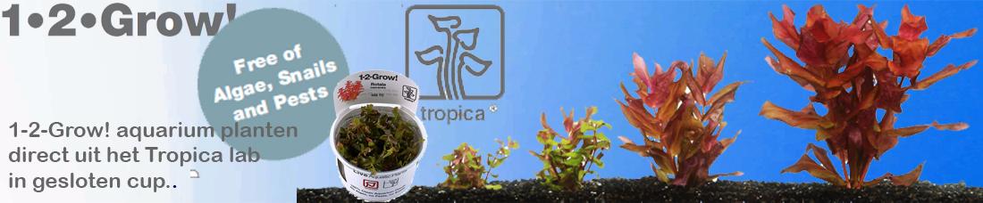 Tropica 1-2 grow