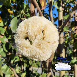 Flowerball Cream