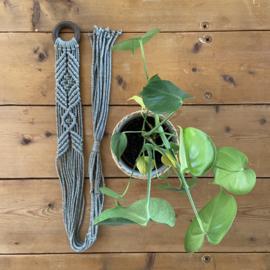 Plantenhanger green