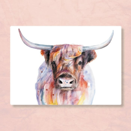 Postkaart Schotse Hooglander, Zintenz