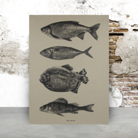 Fish | A2 - per 3 stuks