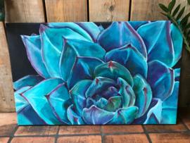 Blauw paarse vetplant