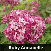Ruby Annabelle