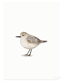 Drieteenstrandloper (vogelkaart)