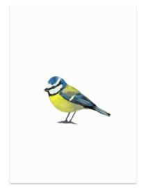 Pimpelmees (vogelkaart)