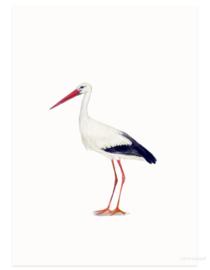 Ooievaar (vogelkaart)