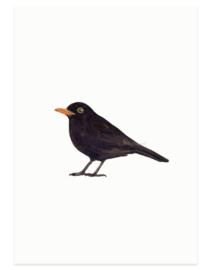 Merel (vogelkaart)