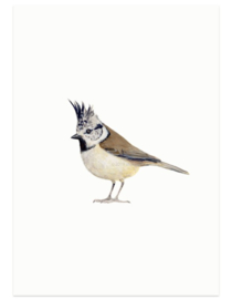Kuifmees (vogelkaart)