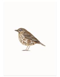 Zanglijster (vogelkaart)