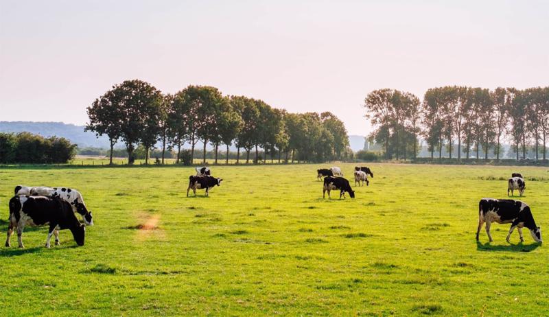 Fietsroute Bronckhorst (43km)