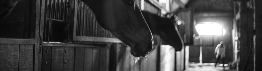 Paarden Stal onderhoud
