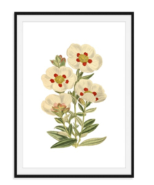 Annemoon bloem - Poster