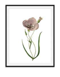 Papaver bloem - Poster