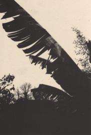 STUBBORN CACTUS by DELPHINE BEDEL