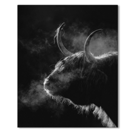 Schotse Hooglander. Zwart/Wit op canvas.