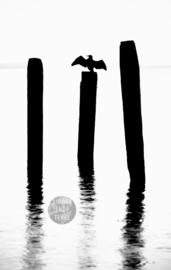 Aalscholver op Paal. Zwart/Wit, ringen in de hoeken.