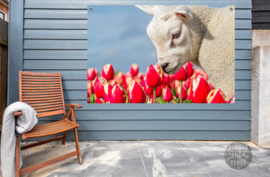 Lammetje en Tulpen, ringen in de hoeken.