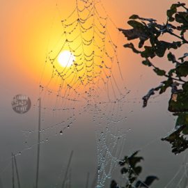 4-Kantje: Spinnenweb en Dauwdruppels op Texel, materiaal canvas.