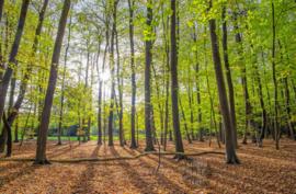 Lente bos op Texel, ringen in de hoeken.