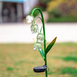 Lily of the valley - Flower - Solar