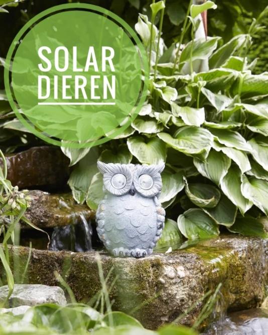 solar dieren
