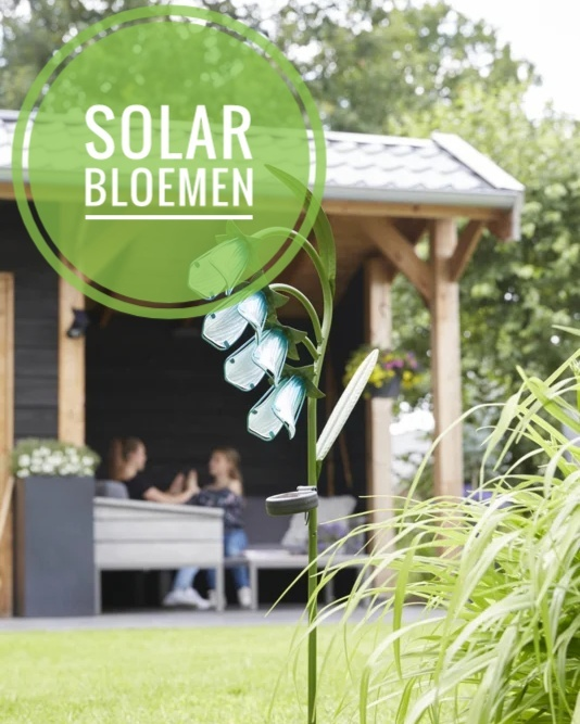 solar bloemen