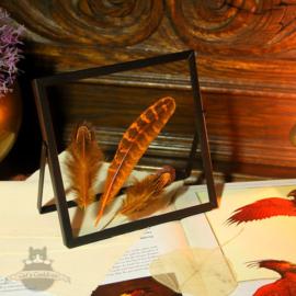 Phoenix Feathers / Feniks veren in vierkante lijst