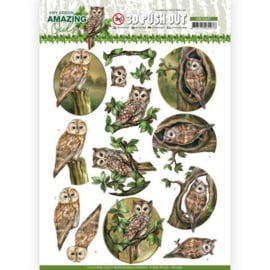 3D Push Out - Amy Design - Amazing Owls - Forest Owls  SB10487