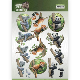 3D Knipvel - Amy Design - Wild Animals - Bears  CD11300-HJ17001