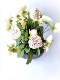 Pantoffelplant creme kunstplanten kunstbloemen