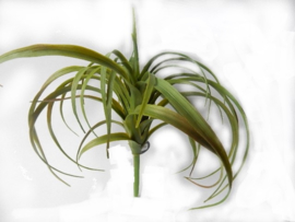 Tillandsia groen kunstplanten kunstbloemen