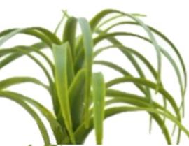 Tillandsia groen grijs  M kunstplanten kunstbloemen