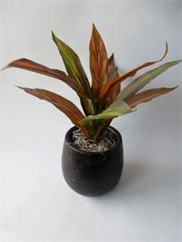 Pflanze rot grün Kunstpflanzen Kunstblumen