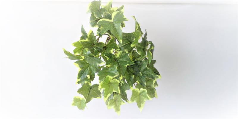 Hedera klein varigated MICA hangplant kunstplanten en kunstbloemen